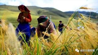 Highland barley: A bite of Shangri-La