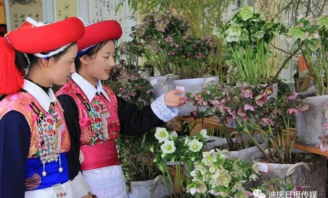Spring flowers on show in Shangri-La