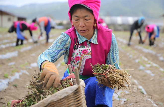 Creating a new life in Diqing, northwest Yunnan