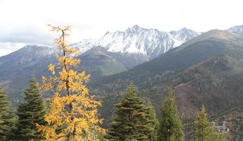 Beautiful autumn scenery of the Baima Snow Mountain in Shangri-La
