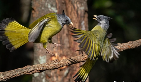 In pics: Come to Yunnan for a bird-watching tour