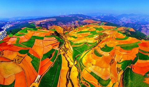 Red-soil land presents dazzling colors in Dongchuan