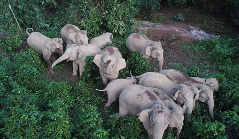 Elephant preserve to ease conflicts with humans